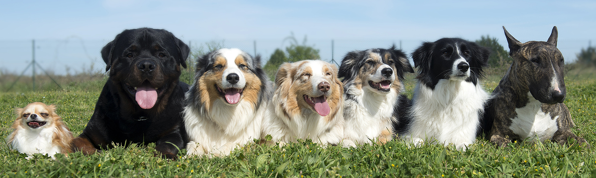 Row of Happy Dogs